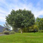 الأشجار والنباتات الطبيعية